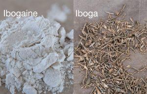 Iboga vs Ibogaine comparison