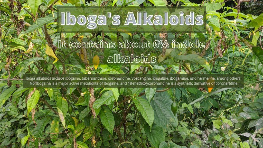 iboga alkaloids